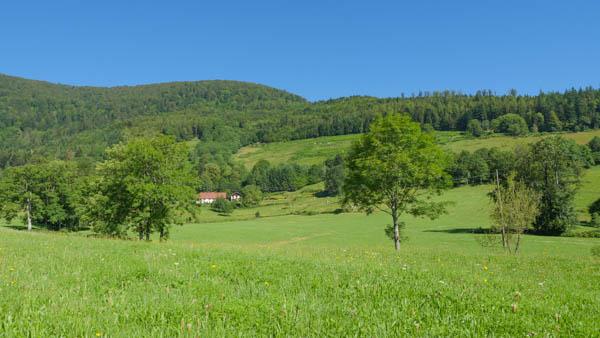 Vallon du Rammsersbach